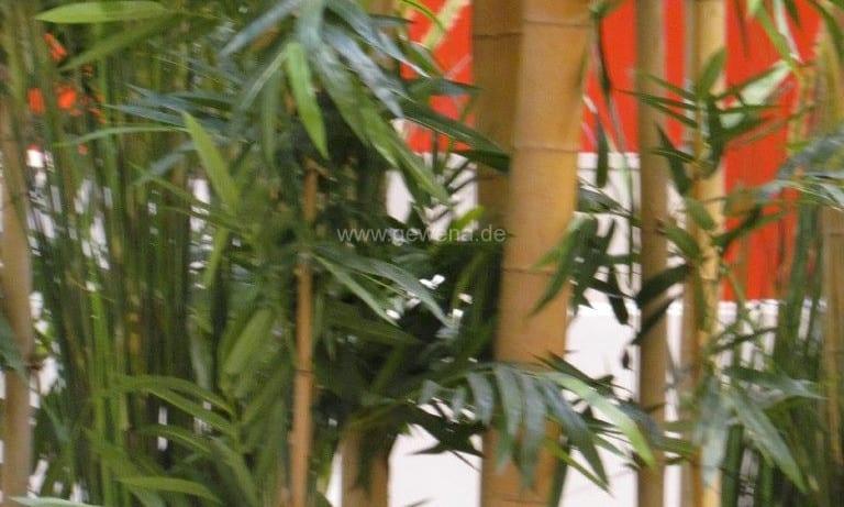 gruenraumgestaltung-bambus-rieger-goeppingen